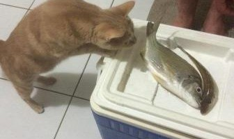 Fish Tales with Fleur